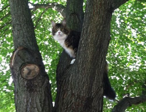 Lost and Found: How to Help a Stray Cat