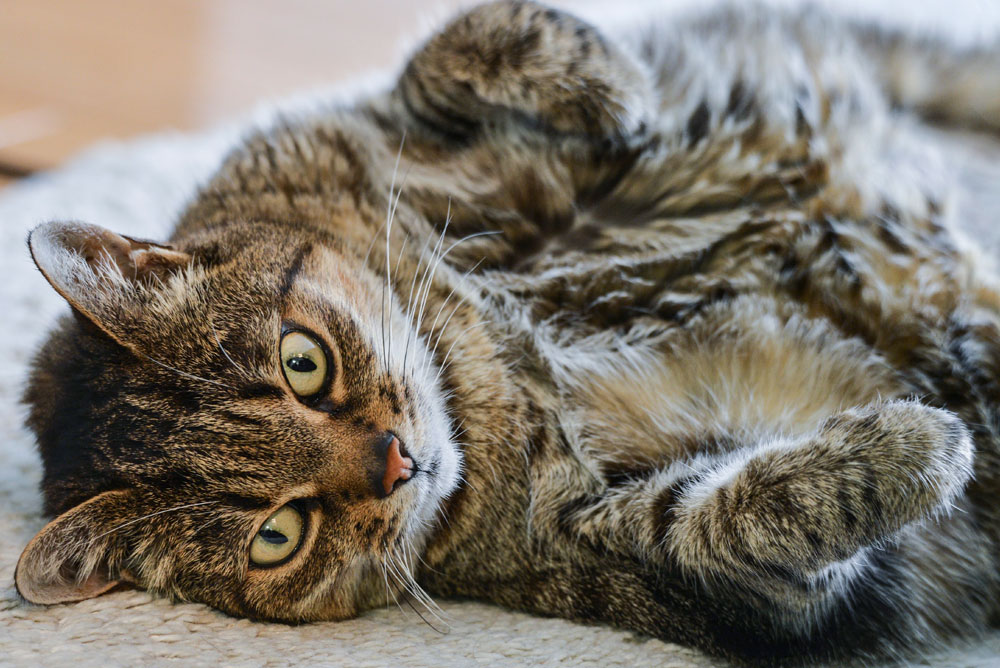 What You Need To Know About Cats And Kidney Disease Just Cats Clinic