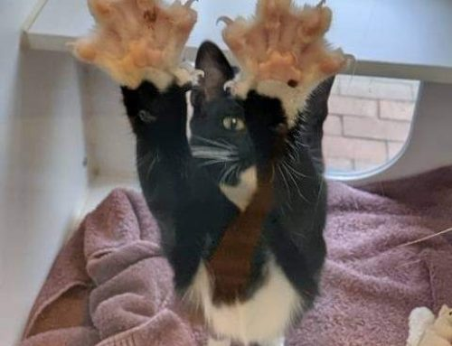 Cats Need Their Claws: Alternatives to Declawing Your Cat