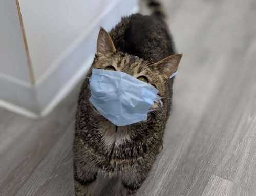 Feline First Aid: How to Provide Emergency First Aid to Your Cat