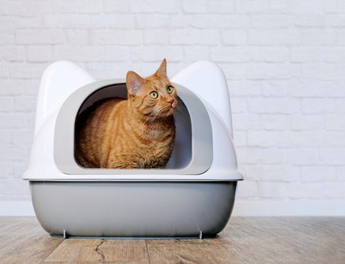 5 Feline Conditions that Require Emergency Care