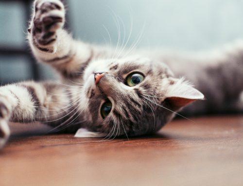 Feline Immunodeficiency Virus